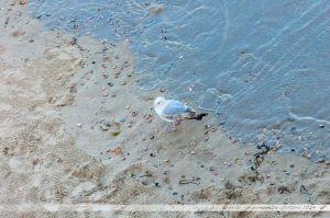 Mouette sur la plage de Bournemouth