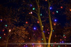 Les Lumières de Laval 2013 - Décors lumineux dans les arbres de la Place du 11 Novembre