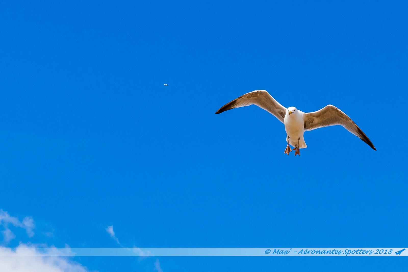 Goéland sous le ciel bleu de la plage de Brighton